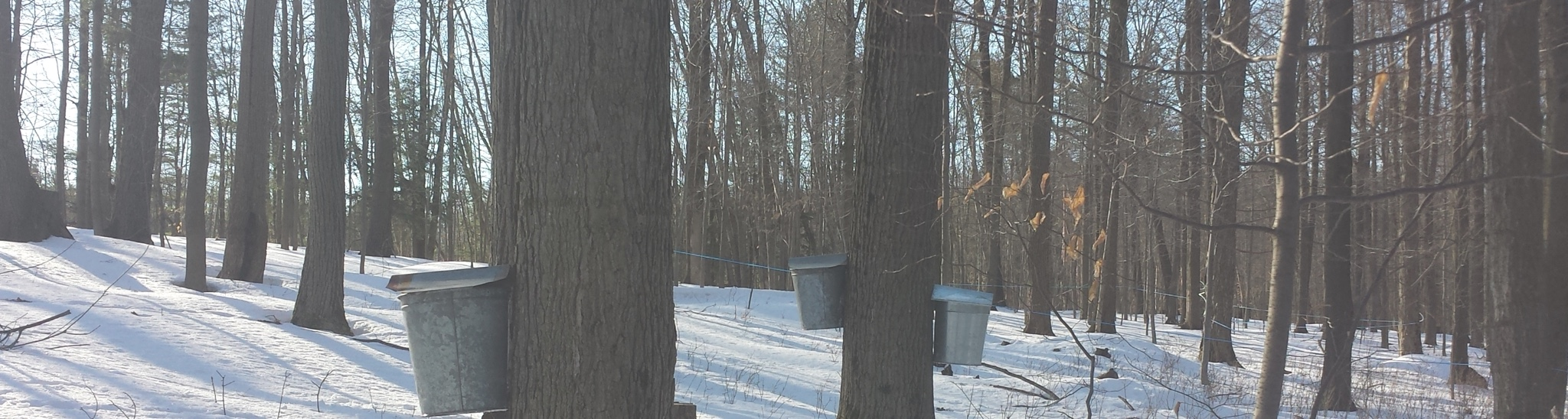 sugaring season